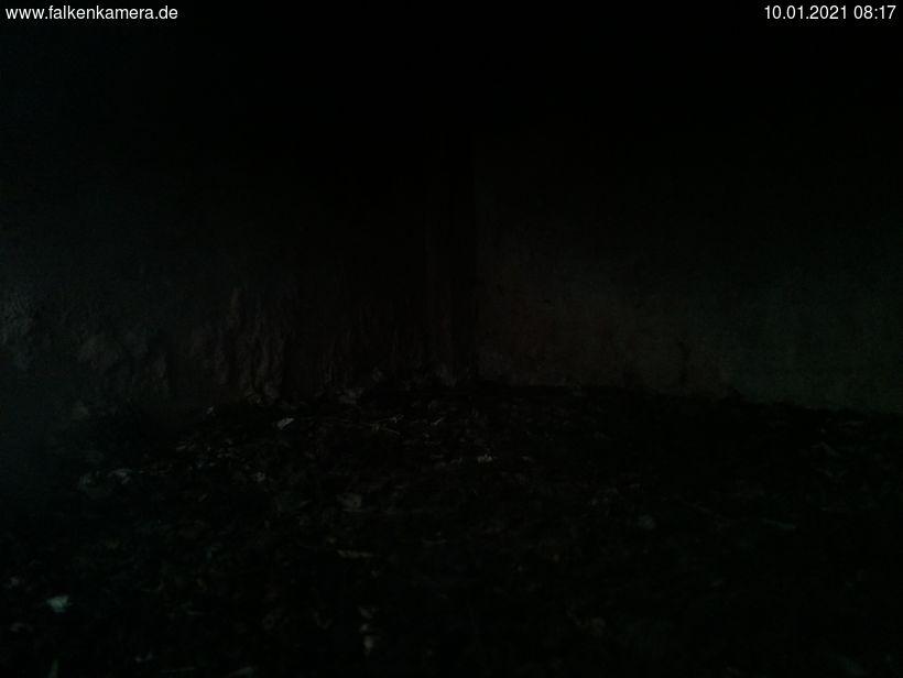 Falkenkamera Neugraben
